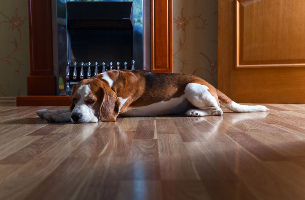 Hardwood-Flooring-in-Toronto--Best-Options-for-Homes-With-Dogs