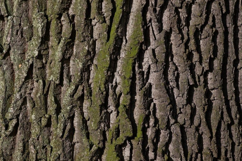 bark, tree, oak