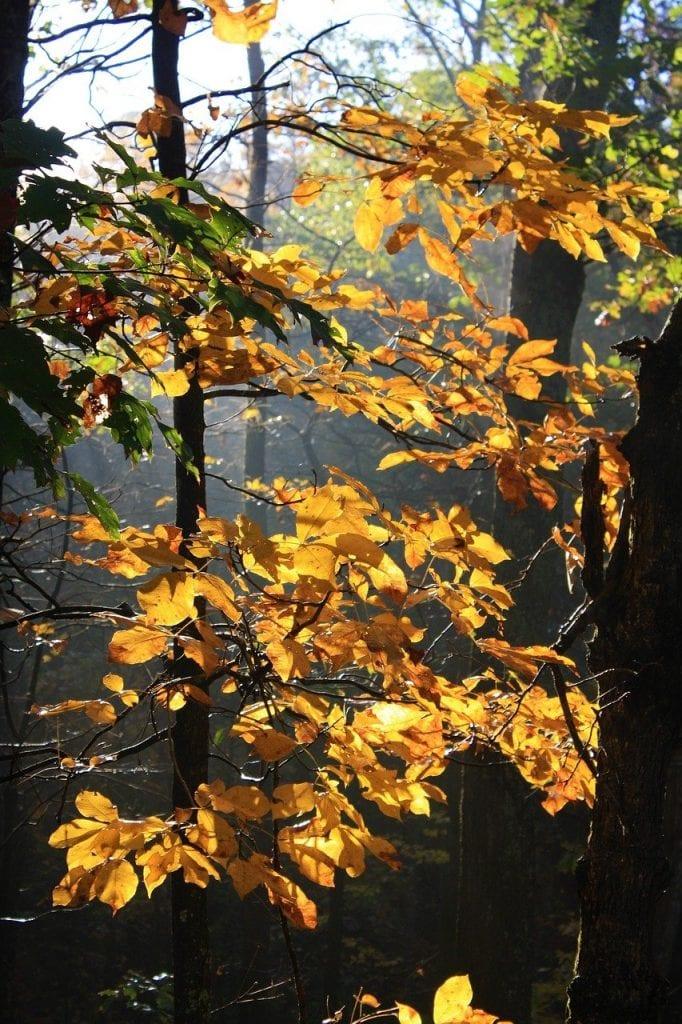 hickory, autumn, fall